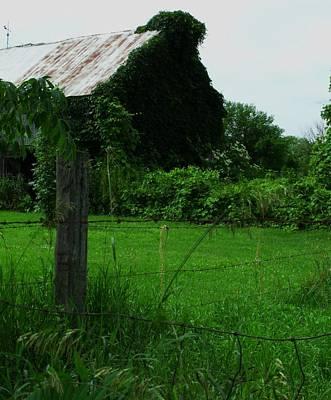 Photograph - Down On The Farm by Anna Villarreal Garbis