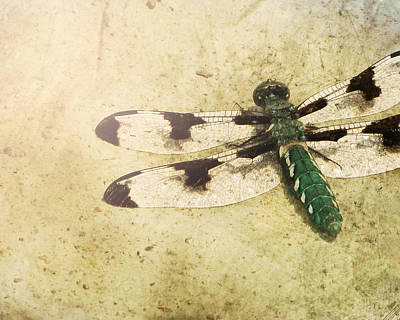 Dragonfly Photograph - Dragon In The Sun by Amy Tyler