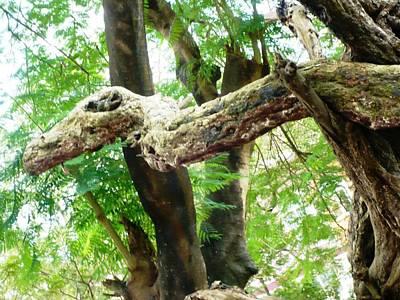 Pietyz Nature Photograph - Dragon Tree by Piety Dsilva