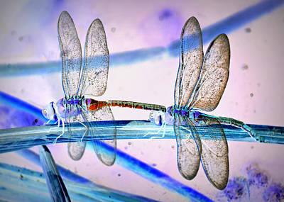 Dragonfly Fantasy Print by Fraida Gutovich
