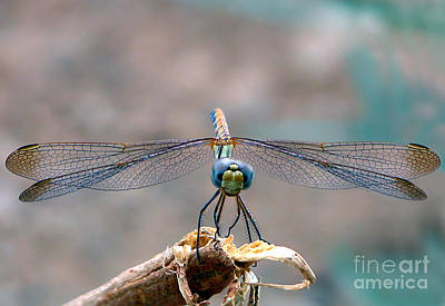 Gicl Photograph - Dragonfly Headshot by Graham Taylor