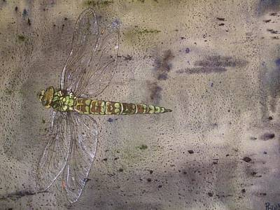 Dragonfly In Flight-ppmpmdf001 Print by Pat Bullen-Whatling