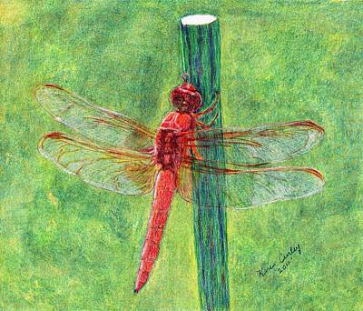 Antennae Drawing - Dragonfly by Karen Curley