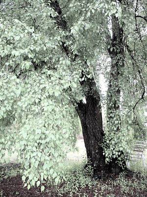 Dreamy Mint Green Surreal South Carolina Tree Print by Kathy Fornal