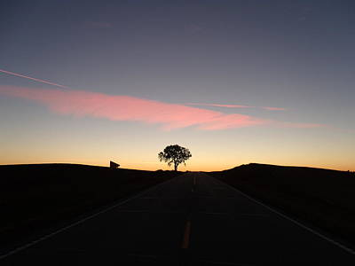 Peaches On A Tree Photograph - Dreamy Tree Road by Brian  Maloney