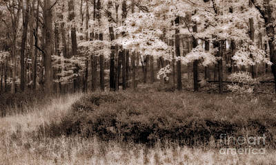 Trees Photograph - Dreamy Woods by Susan Candelario