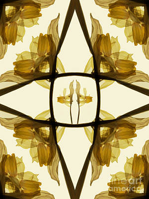 Dried Daffodil Composition Print by Janeen Wassink Searles