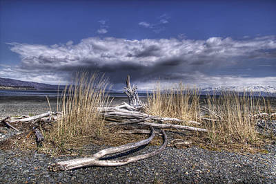 Driftwood By The Sea Print by Michele Cornelius