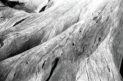 Jekyll Photograph - Driftwood, Jekyll Island, Georgia by Jason Quick