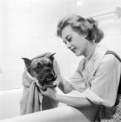 Domestic Bathroom Photograph - Drying Doggy by Three Lions