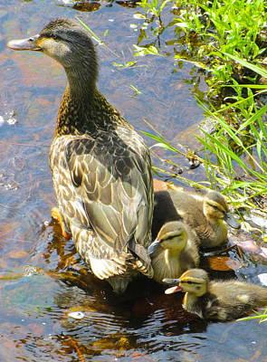 Ducklings Print by Sarah Gayle Carter