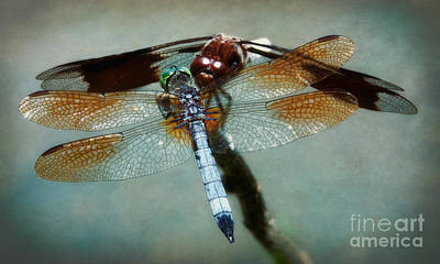 Dueling Dragonflies Print by Susan Isakson