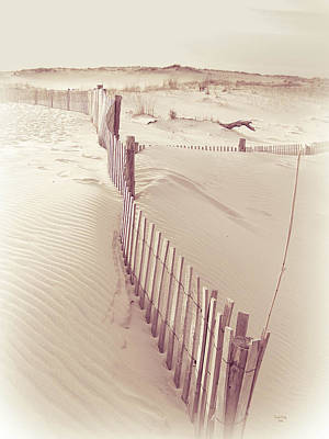 Rehoboth Photograph - Dunes On The Cape by Trish Tritz