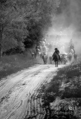 Cattle Drive Photograph - Dusty Trail by Fred Lassmann