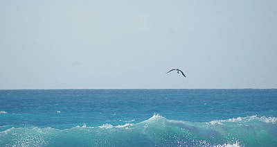 Eagle Flying Over Sea Print by Fabian Jurado's Photography.