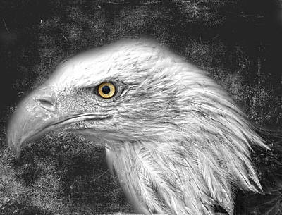 Eagle Two Print by JC Photography and Art