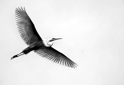 Of Birds Photograph - Egret Elegance by Skip Willits
