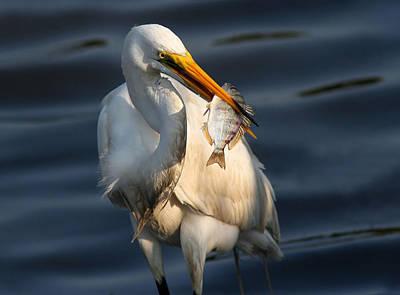 Egret Fishing Print by Phil Lanoue