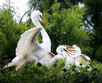 Egret With Babies Print by Paulette Thomas