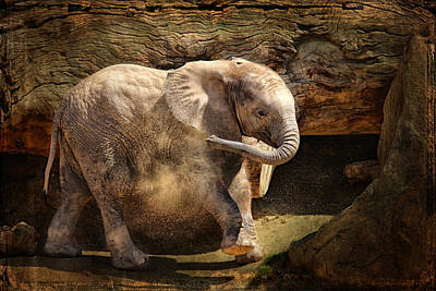 Calf Photograph - Elephant Calf by Larry Marshall