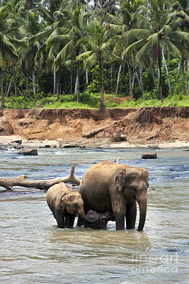 Wrinkled Photograph - Elephant Family by Jane Rix