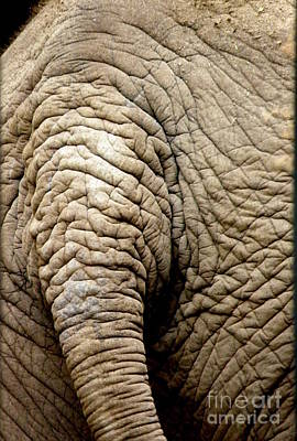 Elephant Tail Print by Lainie Wrightson