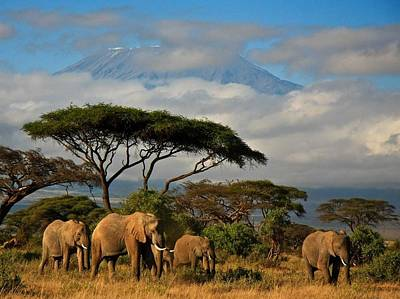 Photograph - Elephantskenya by Mickey Mouse