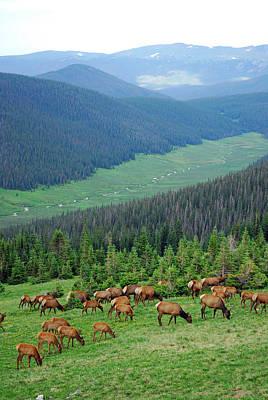 Elk Highlands Print by Robert Meyers-Lussier