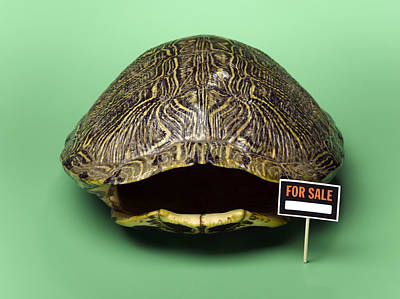 Empty Turtle Shell With For Sale Sign Print by Jeffrey Hamilton