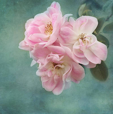 Enchanted Pink Rose Print by Kim Hojnacki
