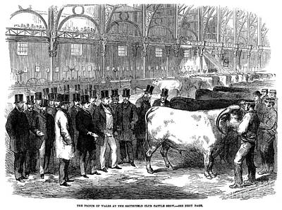 England: Cattle Show, 1863 Print by Granger