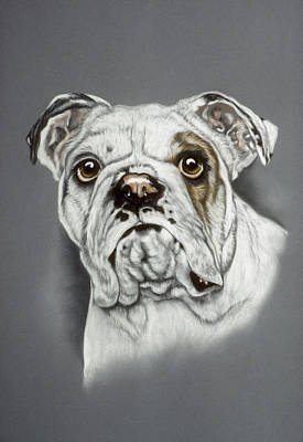 English Bulldog Drawing Pastel - English Bulldog by Patricia Ivy