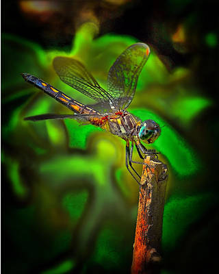 Enhanced Dragonfly Print by Dave Sandt