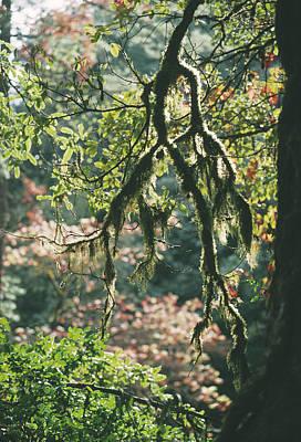 Epiphyte Photograph - Epiphytic Moss by Doug Allan