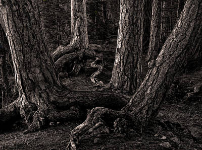 Forest Photograph - Evening Pines by Ari Salmela