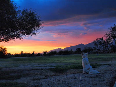 Dog Photograph - Every Dog Has His Sun Set by Veronica Zimmerman