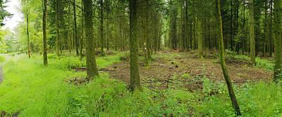 Exmoor Forest Original by Jan W Faul