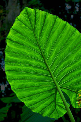 Selby Photograph - Exotic Green Leaf by Amanda Vouglas