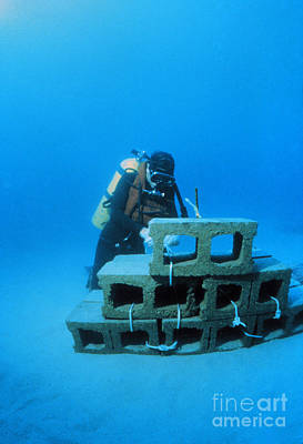 Casita Photograph - Experimental Reef by Science Source