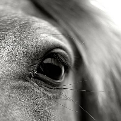 Eye Of Horse Print by Gabriella Nonino