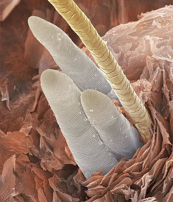 Eyelash Mite Tails Sem Print by Power And Syred