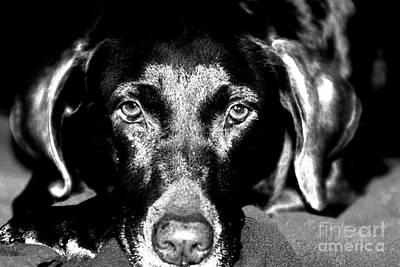 Leda Photograph - Eyes by Leslie Leda