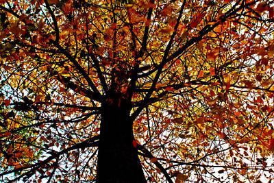 Fall Photograph - Fading Life by Joshua Dwyer