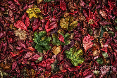 Fall Autumn Leaves Print by John Farnan