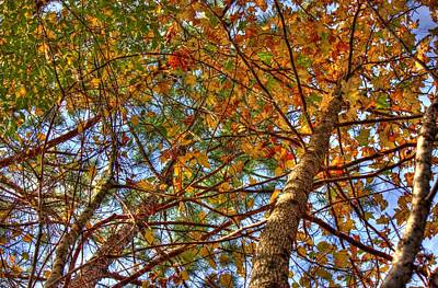 Trail Photograph - Fall Canopy by Barry Jones