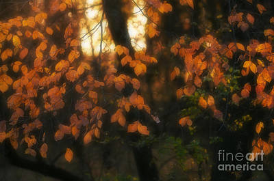 Sunset Photograph - Fall Colours by Art Whitton