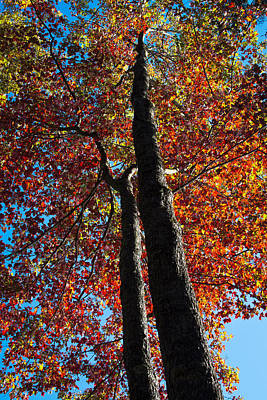 Nature Photograph - Fall From Above by David Patterson