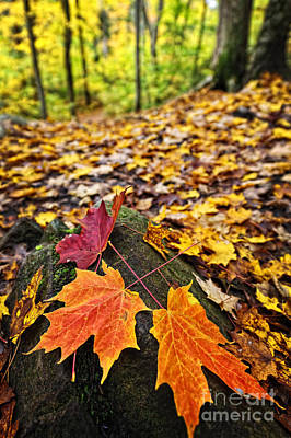 Fallen Leaves Photograph - Fall Leaves In Forest by Elena Elisseeva