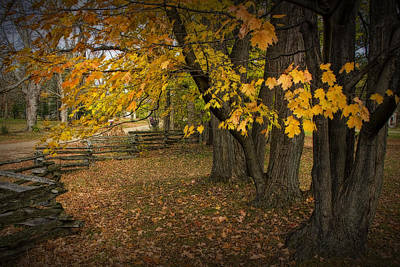 Fall Maple Leaf Trees With Split Rail Fence Print by Randall Nyhof