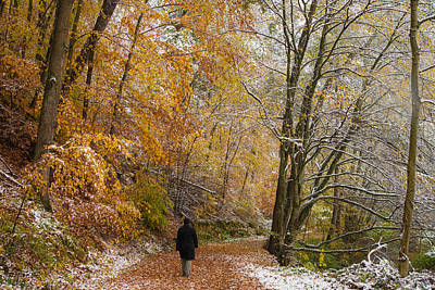 Dialog Photograph - Fall Meets Winter - Walking In The Forest by Matthias Hauser